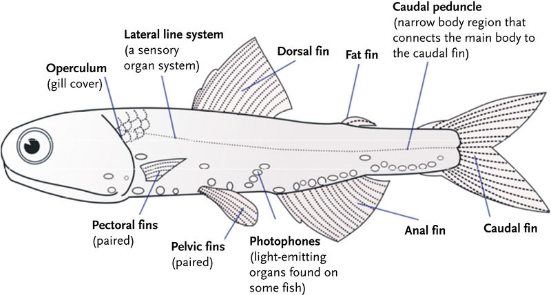 Fish Organ Systems