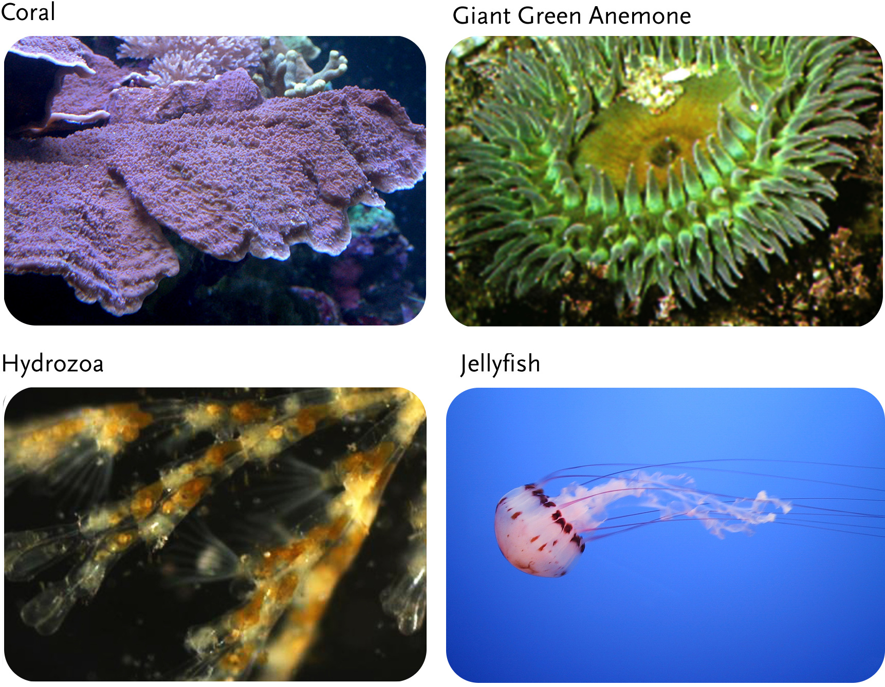 c cnidarians d Class-level relationships in the phylum cnidaria: evidence from mitochondrial   2011, danovaro r, company jb, corinaldesi c, d'onghia g, galil b, et al.